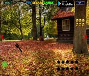 Игра Побег из пригородного леса на FlashRoom