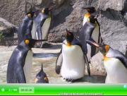 Игра SSSG - Penguins Crystal Hunter на FlashRoom