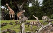 Игра Побег из зоопарка на FlashRoom
